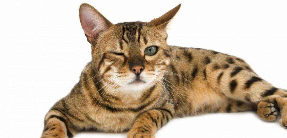 Choisir un distributeur de croquettes pour chat : découvrez les critères